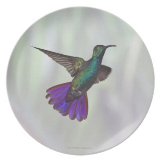 Green-breasted Mango Hummingbird Anthracocorax Dinner Plates