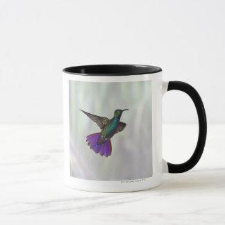 Green-breasted Mango Hummingbird Anthracocorax Mug