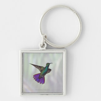 Green-breasted Mango Hummingbird Anthracocorax Silver-Colored Square Key Ring