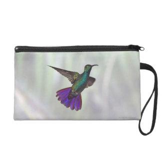 Green-breasted Mango Hummingbird Anthracocorax Wristlet
