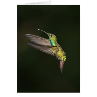 Green-breasted Mango male Note Card