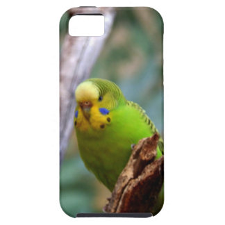 Green Budgie iPhone 5 Cover