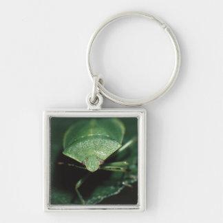 green bug keychains
