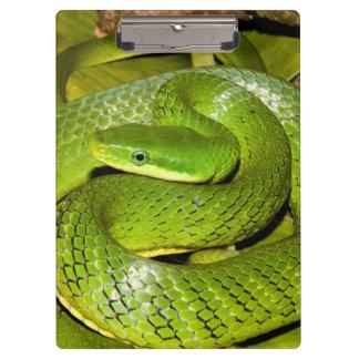 Green Bush Rat Snake Clipboard