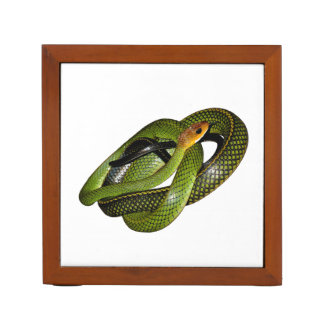 Green Bush Rat Snake Desk Organiser