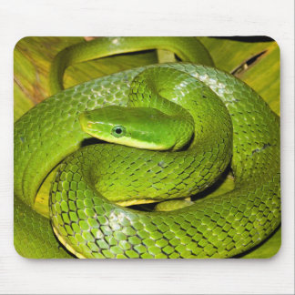 Green Bush Rat Snake Mouse Mat