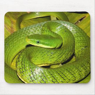 Green Bush Rat Snake Mouse Pad