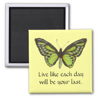 Green Butterfly/Live Magnet
