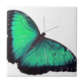Green Butterfly Small Square Tile