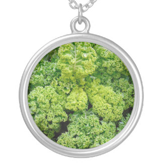 Green cabbage silver plated necklace