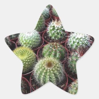 Green cactus plants stickers