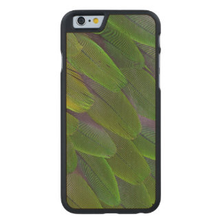 Green Caique Parrot Feather Design Carved Maple iPhone 6 Case