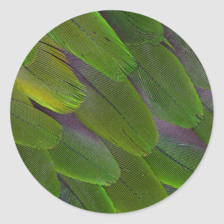 Green Caique Parrot Feather Design Classic Round Sticker