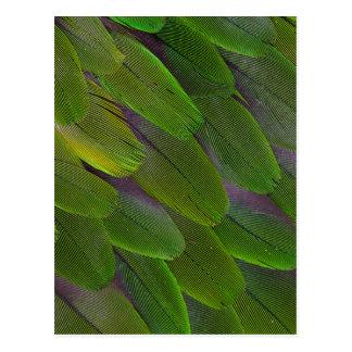 Green Caique Parrot Feather Design Postcard
