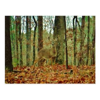 Green Camo,Camouflage Deer Postcard