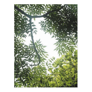 Green Canopy Postcard
