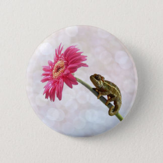 Green chameleon on pink flower 6 cm round badge