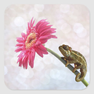 Green chameleon on pink flower square sticker