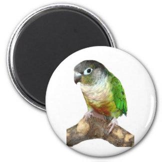 Green Cheek Conure 6 Cm Round Magnet