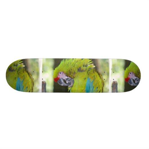 Green Cheek Conure Parrot Skateboard