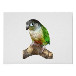 Green Cheek Conure Poster