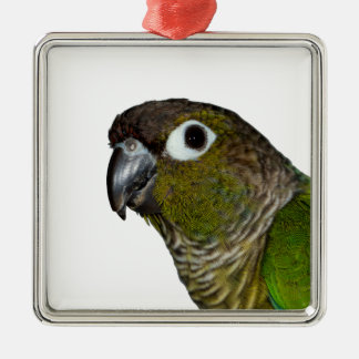 Green Cheeked Conure Christmas Ornament