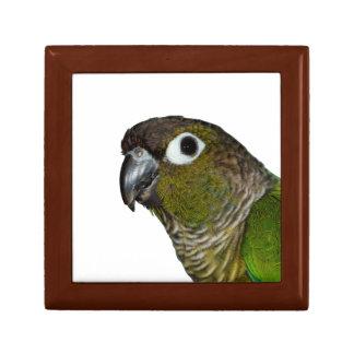 Green Cheeked Conure Gift Box
