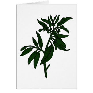 Green chili peppers on dark green plant note card