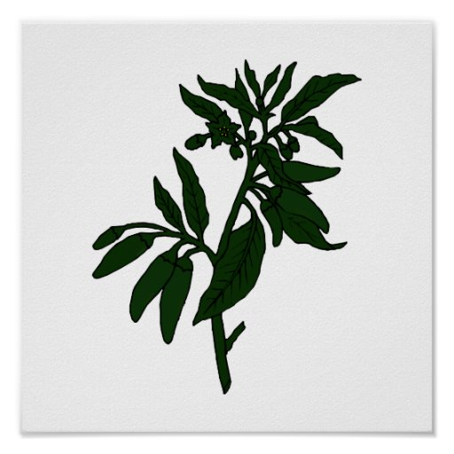 Green chili peppers on dark green plant posters