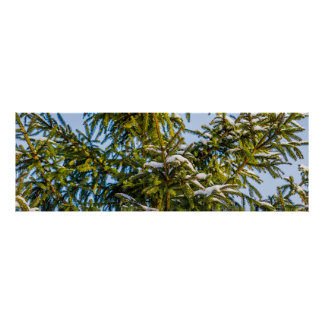 Green Christmas Tree In Snow Poster
