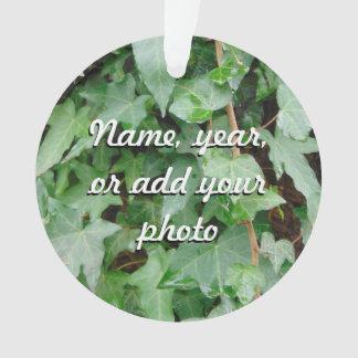 Green Climbing Ivy 0237