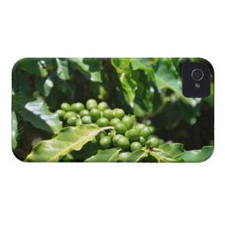 Green Coffee Berries Blackberry Bold Case. Case-Mate iPhone 4 Cases