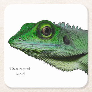 Green-crested Lizard Coasters
