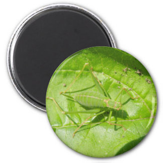 Green Cricket Camouflage Magnet