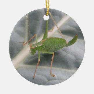 Green Cricket Macro Custom Birthday Round Ceramic Decoration