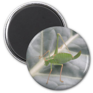 Green Cricket Macro Magnet