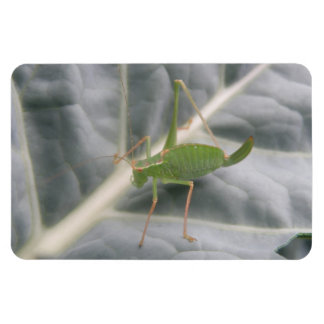 Green Cricket Macro Premium Magnet