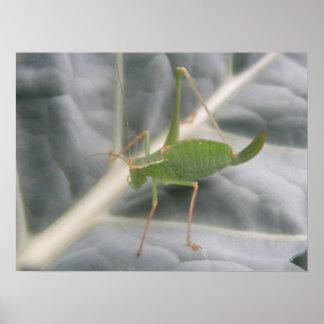Green Cricket Macro Print