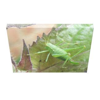 Green Cricket on a Leaf Canvas Print