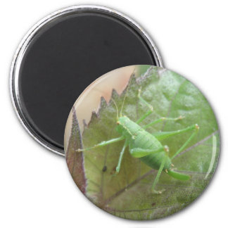 Green Cricket on a Leaf Magnet
