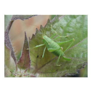Green Cricket on a Leaf Print