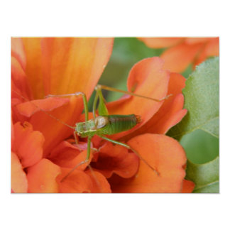 Green Cricket Print