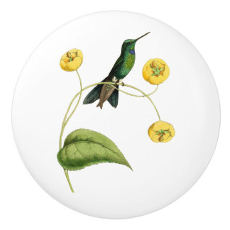 Green Crowned Brilliant Hummingbird Ceramic Knob