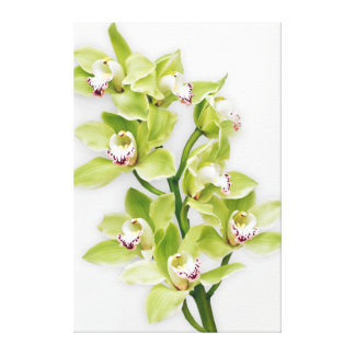Green Cymbidium Orchid Flower Wrapped Canvas Print