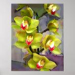 Green Cymbidium Orchids Poster