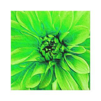Green Dahlia Flower- Closeup Stretched Canvas Prints