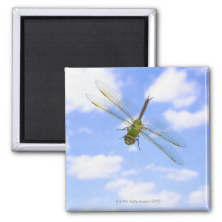 Green darner (Anax junius) flying against clouds Square Magnet