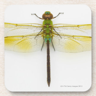 Green darner (Anax junius) on white background, Drink Coasters