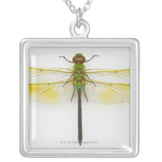 Green darner (Anax junius) on white background, Silver Plated Necklace