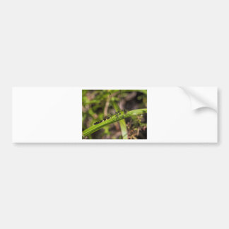 Green Eastern Pondhawk Dragonfly Bumper Sticker